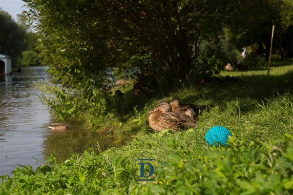 участок ID-246 в коттеджном посёлке Мэдисон парк фото-1
